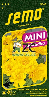 Aksamitník rozkladitý - Safari Yellow 30s - série Mini